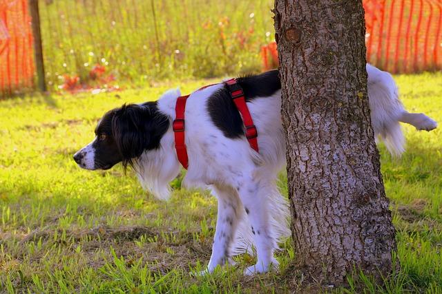 Zo psieho moču údajne vysychajú stromy a kry v mestských parkoch..jpg