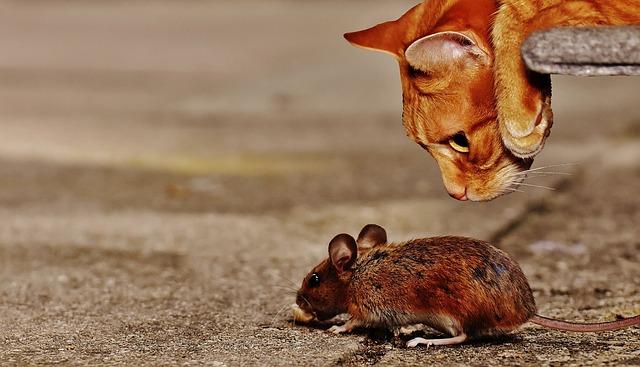 mačka a myš.jpg